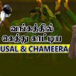 Kusal Perera, Chameera script Sri Lanka victory